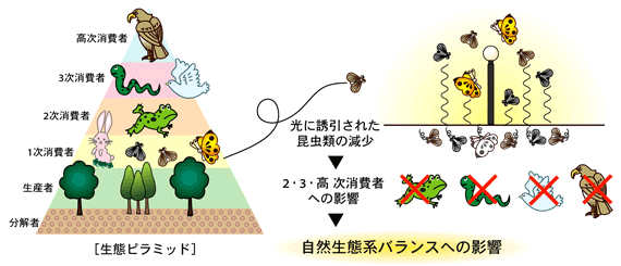 自然生態系への配慮 | 岩崎電気...