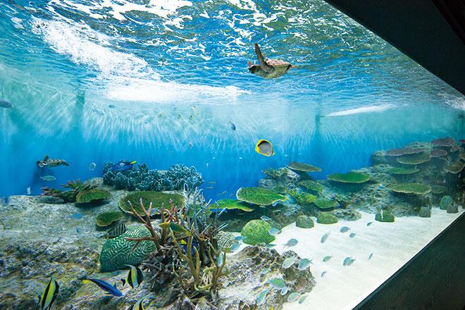 新潟市水族館「マリンピア日本海」